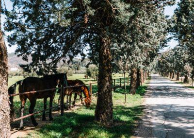 cavalli-locali-assisi